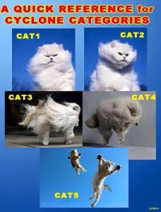 Cats categorized into hurricanes categories for humorous effect.